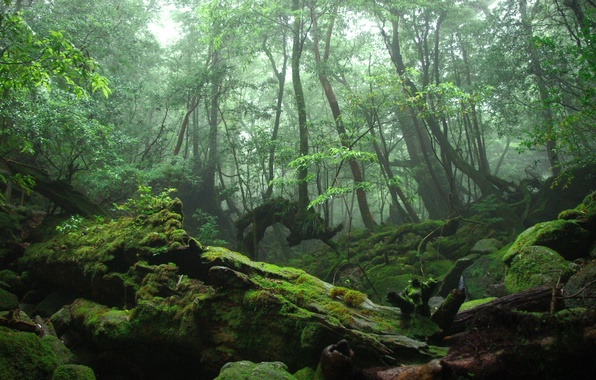 Picture forest, trees, roots, moss, thicket
