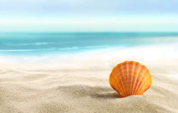 Picture sand, sea, beach, summer, the sun, shell, beach, sand, seashell