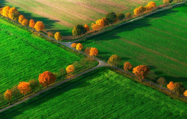 Picture field, autumn, trees, Germany, North Rhine-Westphalia, Nottuln