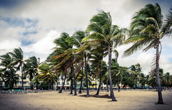 Picture sand, the sky, house, Park, Palma, palm trees, people, the building, cloud, art, house, beach, …