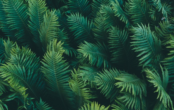 Picture leaves, macro, branches, nature, fern, green background