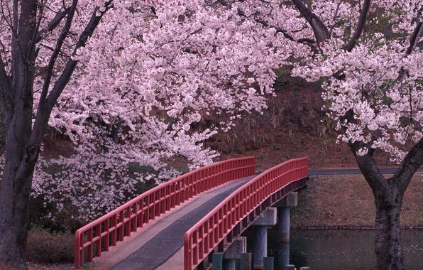 Picture Bridge, Sakura, Japan