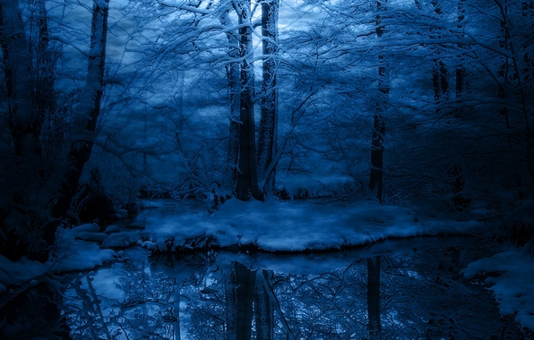 Picture cold, winter, frost, snow, trees, blue