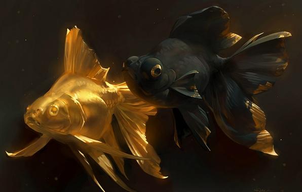 Picture fish, art, goldfish, a couple, golden fish