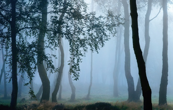 Picture autumn, trees, branches, nature, fog, Rosa, morning, haze