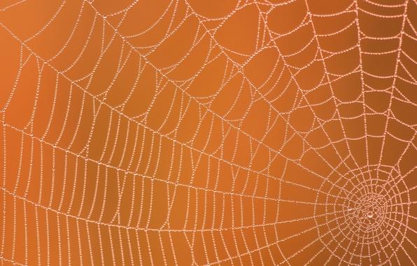 Picture drops, macro, Rosa, background, web