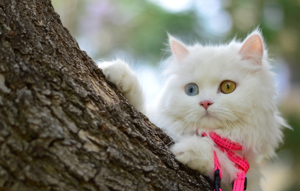 Picture white, look, tree, muzzle, kitty