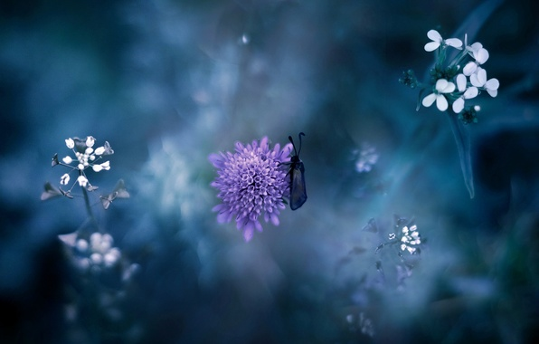 Picture flower, purple, grass, macro, nature, insect