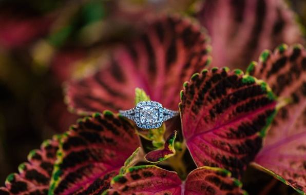 Picture stone, petals, ring, wedding
