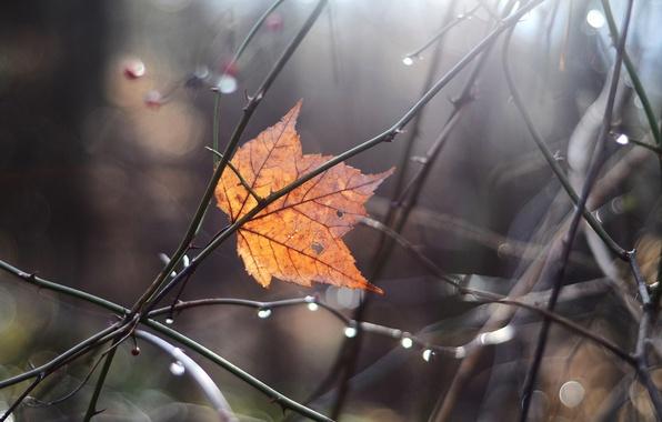 Picture autumn, macro, branches, sheet, glare