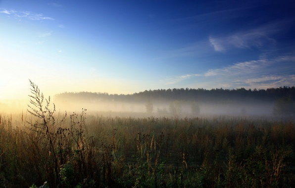 Picture NATURE, GRASS, The SKY, FIELD, GREENS, PLAIN, LIGHT, RAYS, DAL, DAWN, FOG, The SURROUND, MORNING