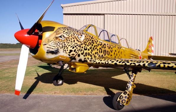 Picture the plane, leopard, airbrushing, Airshow, club, military, collection, Russian, Soviet, double, historical, private, metal, wing, …