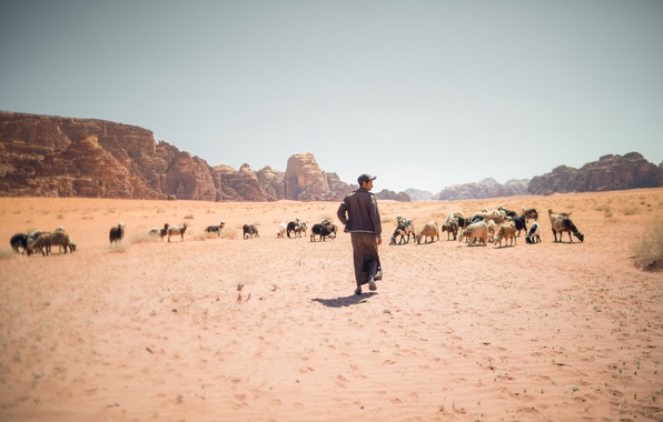 Picture sand, summer, the sky, the sun, hills, desert, shadow, dry, shepherd, the herd, goats