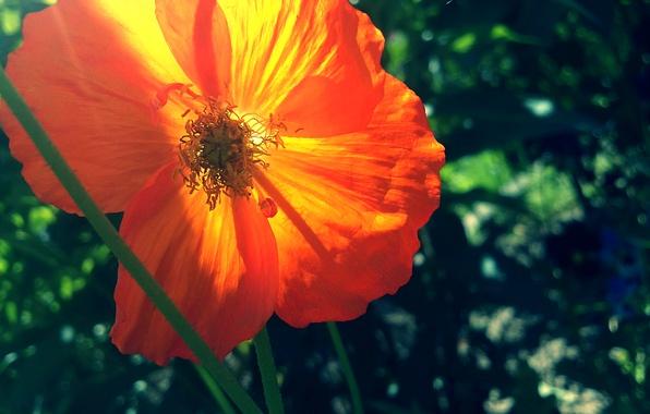 Picture summer, orange, green, Mac