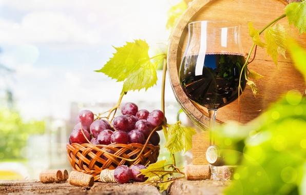 Picture wine, glass, bottle, grapes, barrel, basket