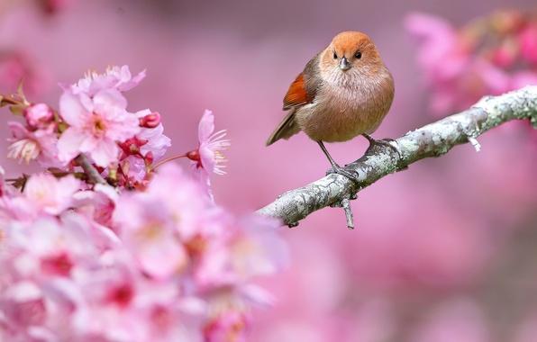 Picture flowers, nature, bird, branch, spring, beak