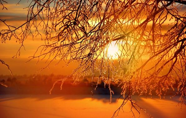Picture winter, the sun, sunset, sunset, winter, Sunrises