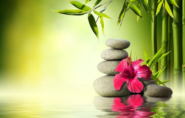 Picture flower, water, stones, bamboo, flower, water, orchid, stones, reflection, bamboo, spa, zen
