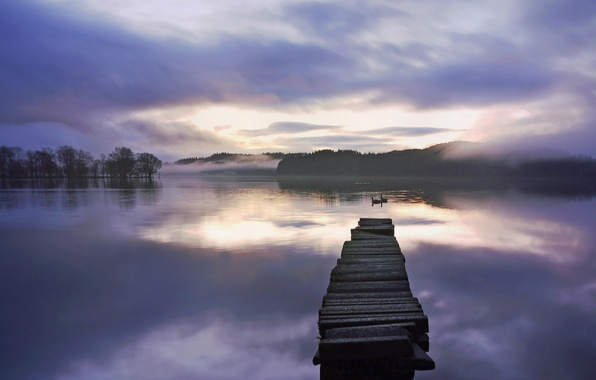 Picture forest, fog, lake, dawn, the bridge, swans