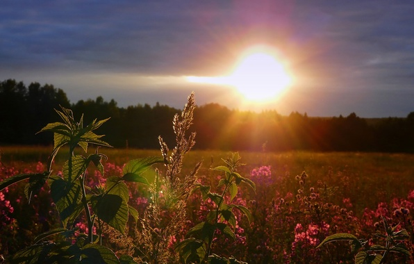 Picture field, the sky, the sun, sunset, flowers