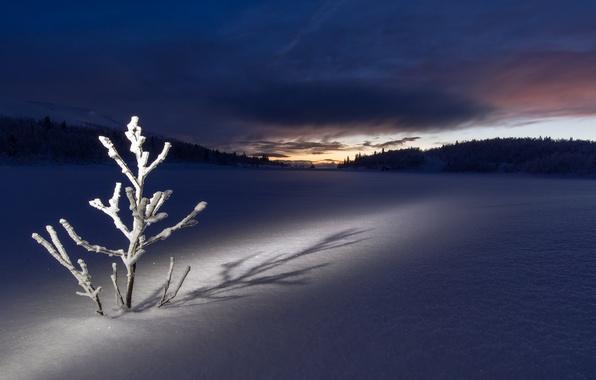 Picture winter, field, snow, night