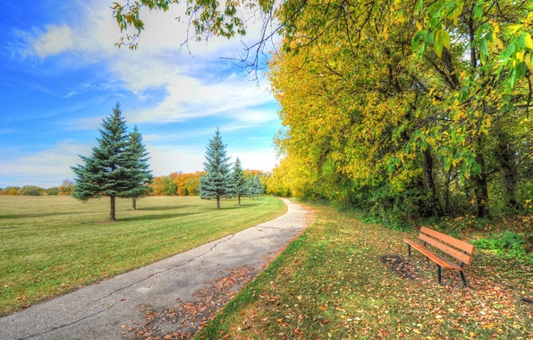 Picture autumn, the sky, grass, clouds, trees, bench, nature, Park, spruce, track