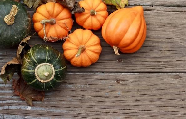 Picture autumn, leaves, tree, harvest, pumpkin