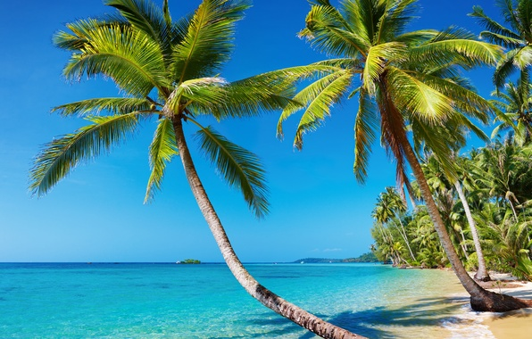 Picture sea, beach, summer, landscape, tropics, palm trees, stay, island, Nature, vacation, resort