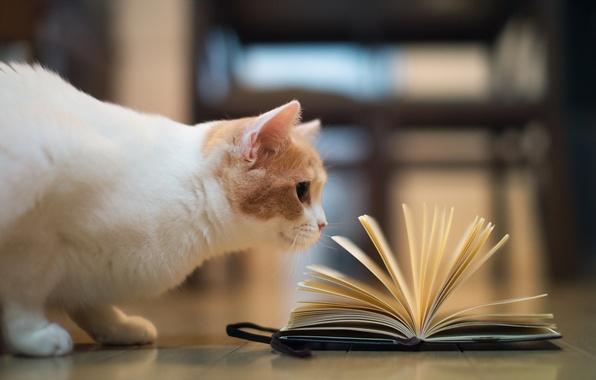 Picture cat, book, torode