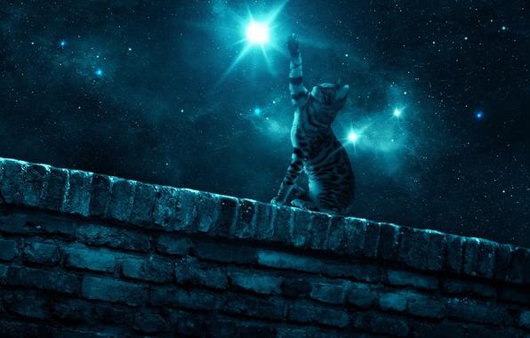 Фото ночь и кот