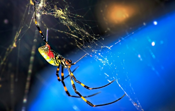 Picture macro, nature, web, spider, insect