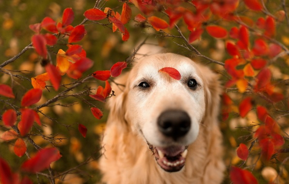 Picture leaves, nature, dog