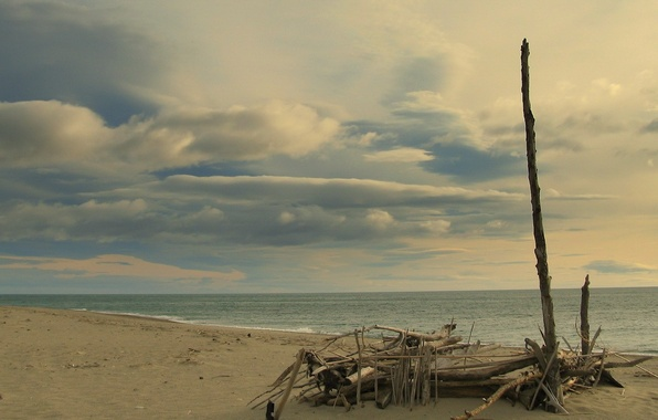 Picture sea, branches, Shore