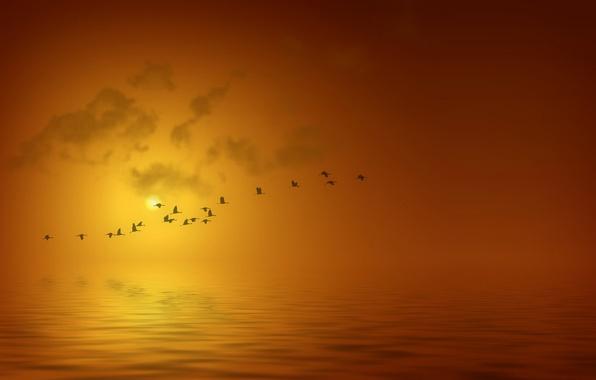 Picture sea, water, the sun, flight, landscape, sunset, birds, background, silhouettes
