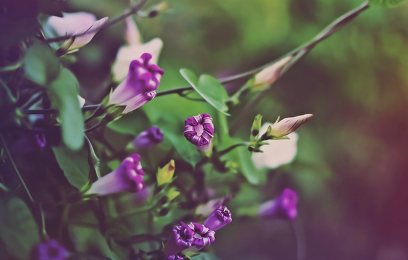 Picture autumn, flowers, shades of green