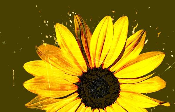 Picture flower, figure, web, petals, gerbera