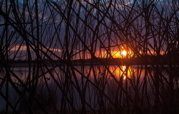 Picture the sun, trees, sunset, branches