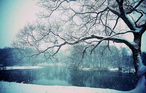 Picture snow, snowing, winter, lake, tree, tree, lake, winter