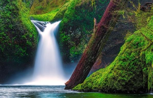 Picture river, waterfall, moss, Oregon, log, Oregon, Columbia River Gorge, the Columbia river gorge, Eagle Creek, …