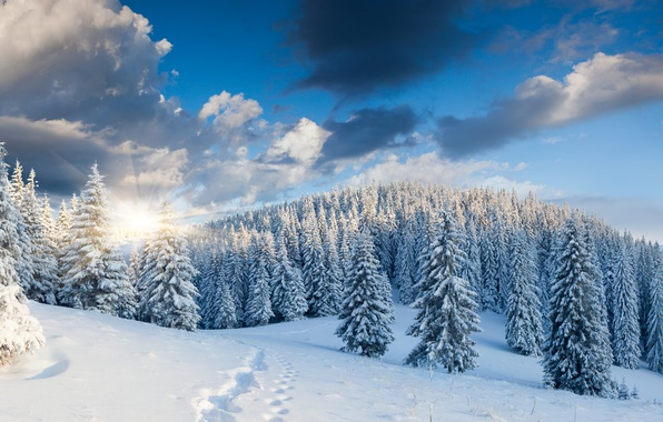 Picture winter, forest, snow, trees, landscape, traces, nature, sunrise