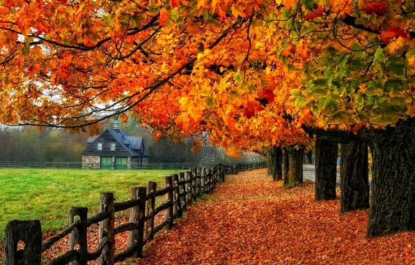 Picture road, autumn, leaves, trees, nature, house, colors, colorful, road, nature, glow, autumn, leaves, tree, branches, …