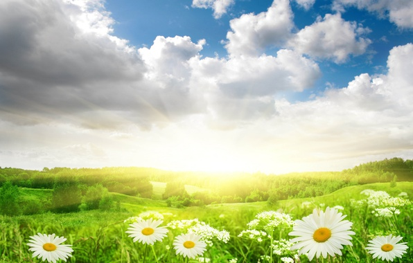 Picture field, the sky, grass, the sun, clouds, light, landscape, flowers, nature, chamomile