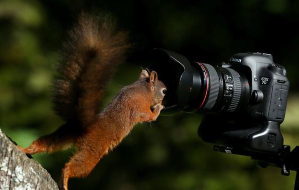 Picture protein, the camera, red, curiosity