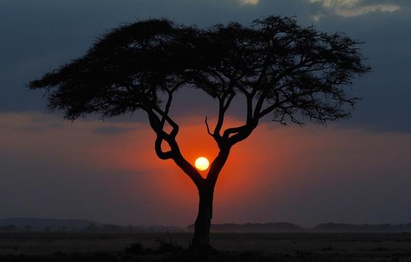 Picture the sun, landscape, sunset, tree, the evening, Savannah, Africa, Kenya