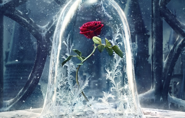 Picture flower, patterns, rose, fantasy, poster, snow, Beauty and the Beast, Beauty and the beast
