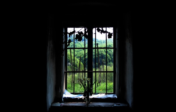 Picture forest, window, black background