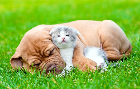 Picture grass, look, each, sleep, dog, fluffy, puppy, kitty