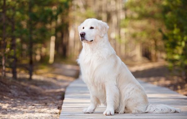 Picture dog, handsome, dog