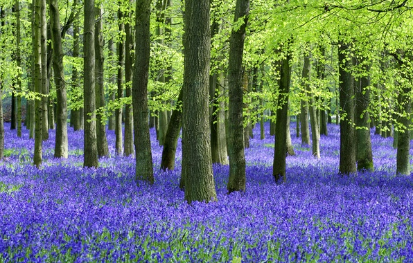 Picture forest, summer, trees, flowers, trunks