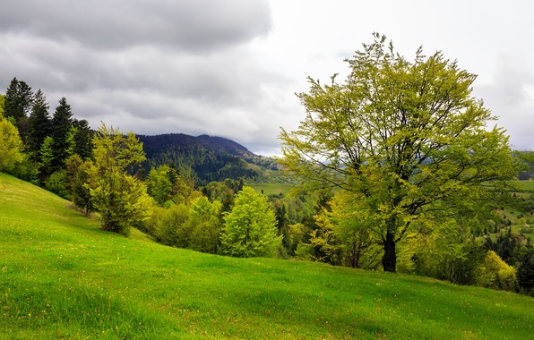 Picture trees, mountains, nature, clearing, trees, nature, mountains, lawn